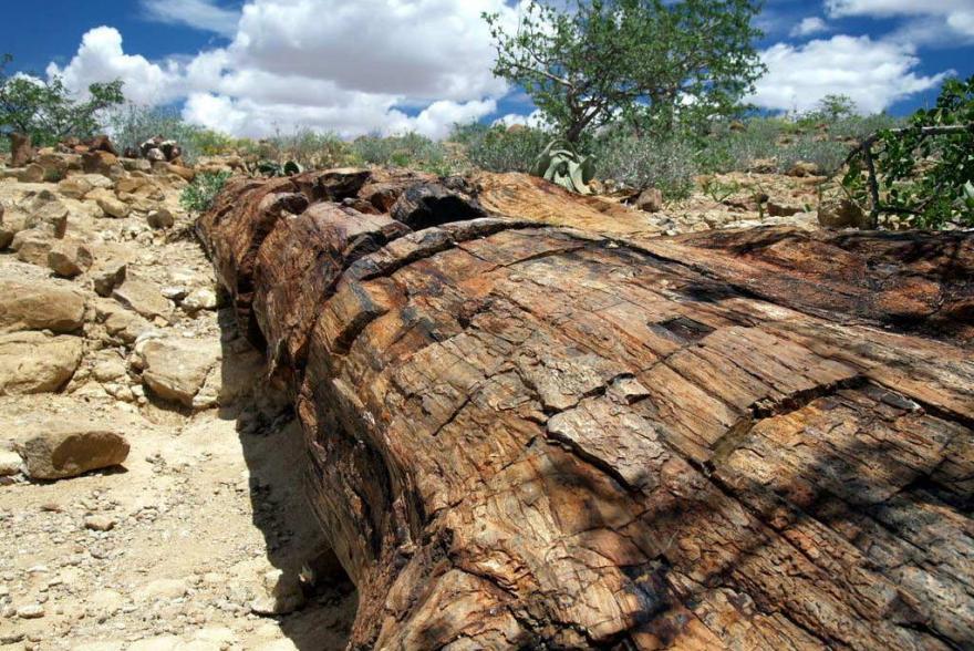Ландшафтный камень - Окаменелое дерево