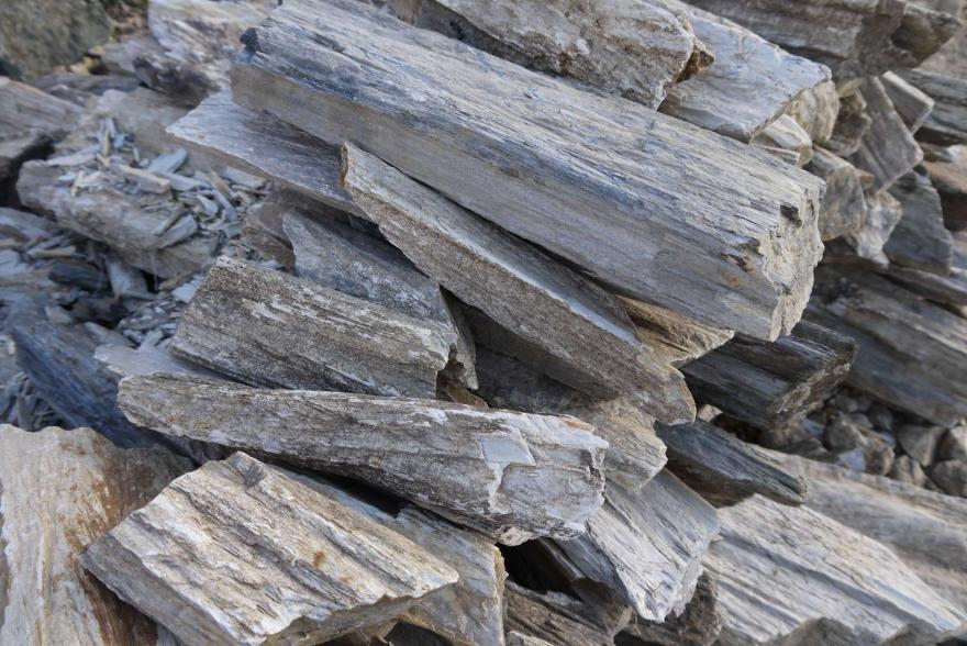 Ландшафтный камень - Окаменелое дерево - 1