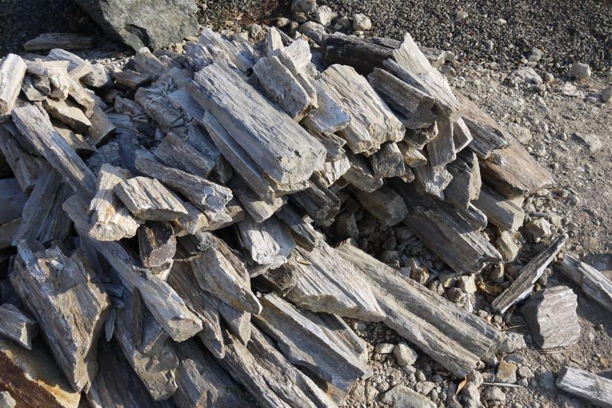 Ландшафтный камень - Окаменелое дерево - 6