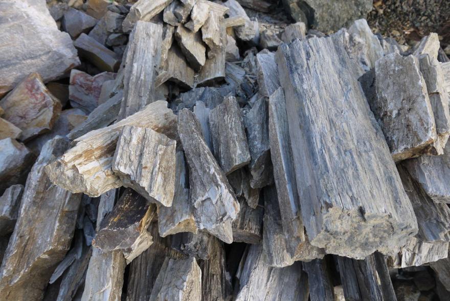 Ландшафтный камень - Окаменелое дерево - 7