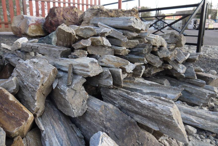 Ландшафтный камень - Окаменелое дерево - 8